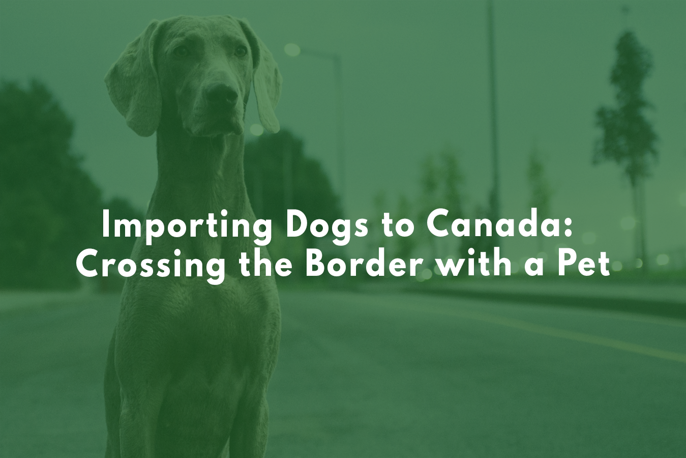 Importing Dogs To Canada Crossing The Border With A Pet